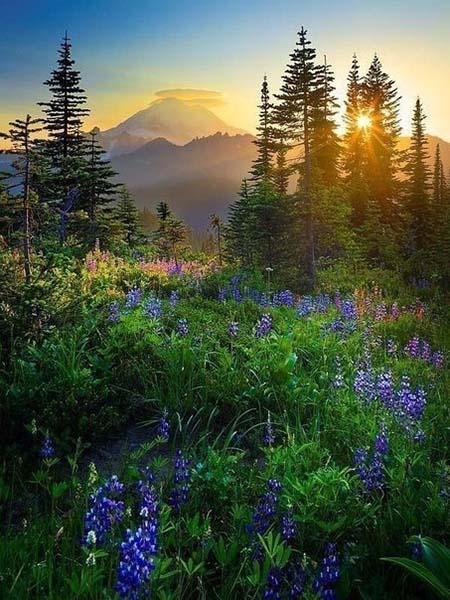 Картинки про природу - самые красивые, удивительные, прекрасные 10