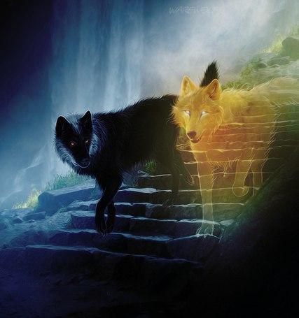 Картинки волков - скачать, смотреть, красивые, прикольные 1