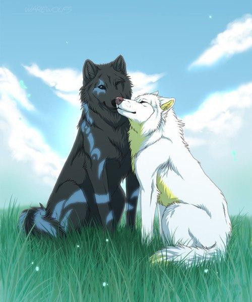 Картинки волков - скачать, смотреть, красивые, прикольные 10