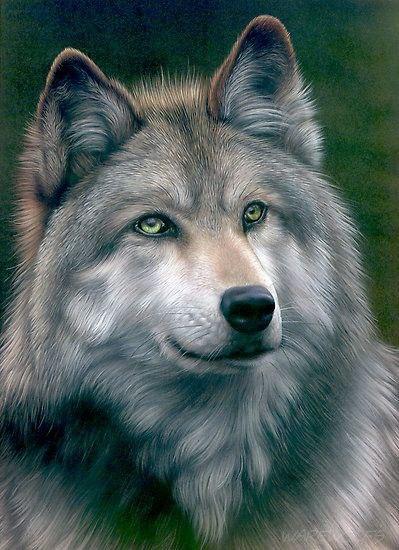 Картинки волков - скачать, смотреть, красивые, прикольные 3