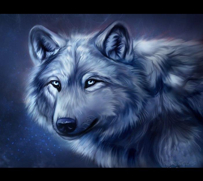 Картинки волков - скачать, смотреть, красивые, прикольные 9