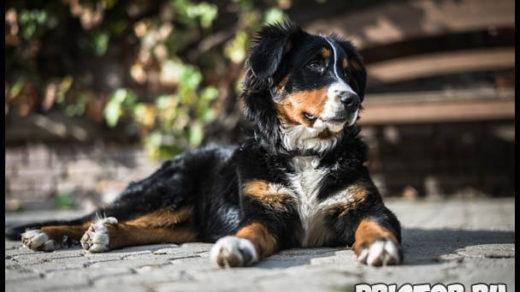 Можно ли кормить собаку кашей Основные крупы для собаки 1
