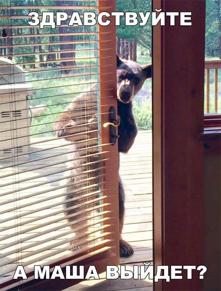 Свежие и новые картинки смешных животных - смотреть подборку 11