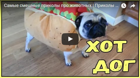Смешные видео про животных - смотреть онлайн, бесплатно