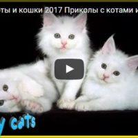 Смешные видео про котов - смотреть бесплатно, онлайн