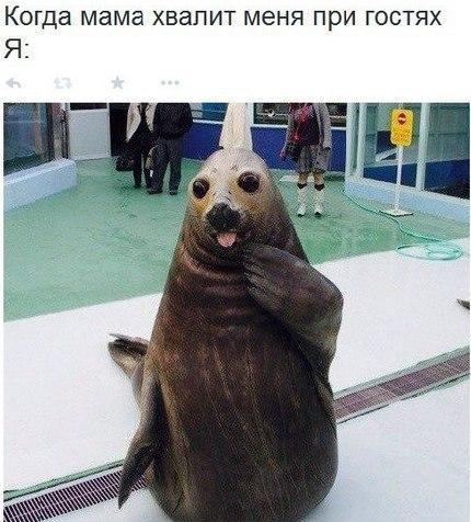 Смешные картинки про животных - скачать, смотреть бесплатно 14