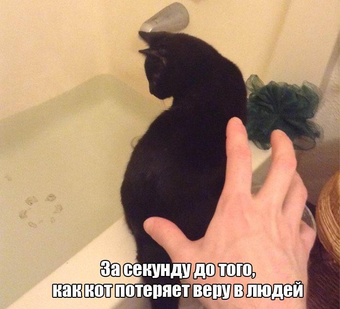 Смешные картинки про животных - скачать, смотреть бесплатно 2