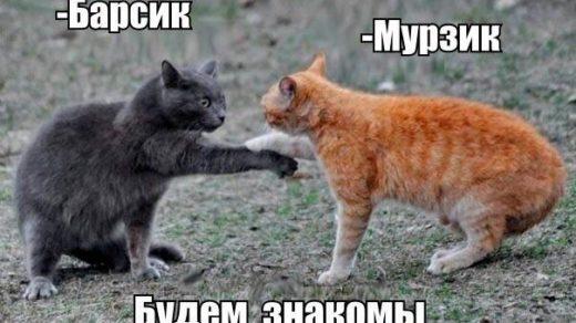 Смешные картинки с животными с надписями - смотреть подборку 5