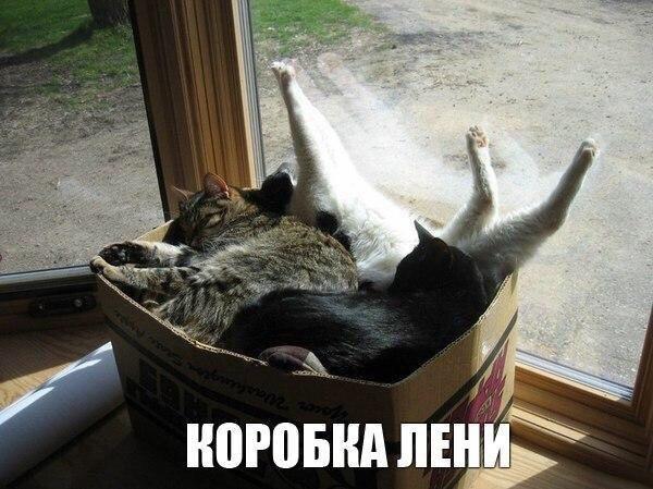 Смешные картинки с животными с надписями - смотреть подборку 7