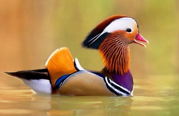 Топ-10 самых красивых и ярких птиц - фото и описание 9