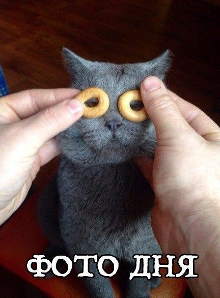 Фото и картинки смешных животных до слез - смотреть бесплатно 1