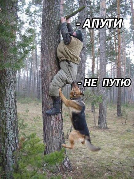 Фото и картинки смешных животных до слез - смотреть бесплатно 10