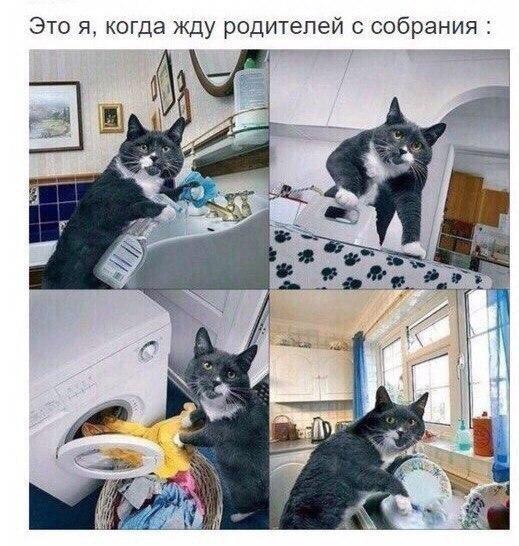 Фото и картинки смешных животных до слез - смотреть бесплатно 12