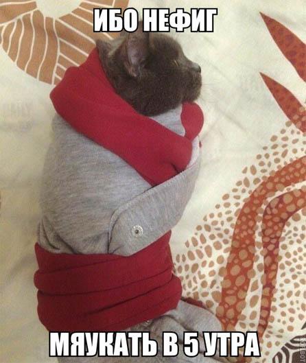 Фото и картинки смешных животных до слез - смотреть бесплатно 5