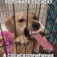 Фото и картинки смешных животных до слез - смотреть бесплатно 7