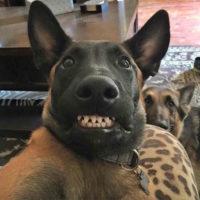 Всратые животные - смешные, ржачные, веселые, прикольные 7
