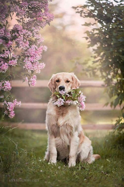 Картинки на аву щенки - красивые, прикольные, классные, крутые 4