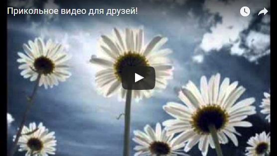 Прикольные видео для друзей - скачать бесплатно, веселые, забавные