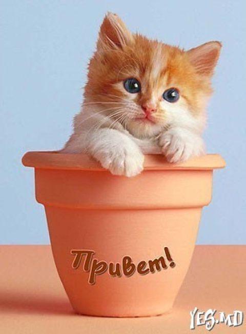 Картинки про, картинки привет котенок