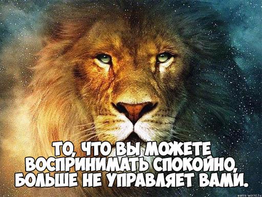 Своими руками, картинки про львов с надписями со смыслом
