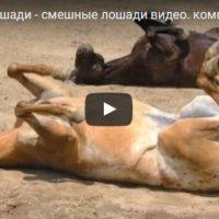 Смешные видео про лошадей - ржачные, новые, свежие, 2017
