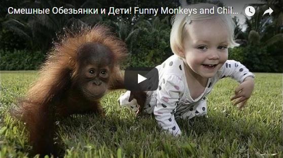 Смешные видео про обезьянок - прикольные, ржачные, забавные