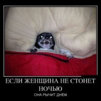 Смешные демотиваторы - свежие до слез, прикольные, ржачные 13