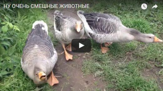 Смешные животные до слез видео - прикольные, ржачные, веселые