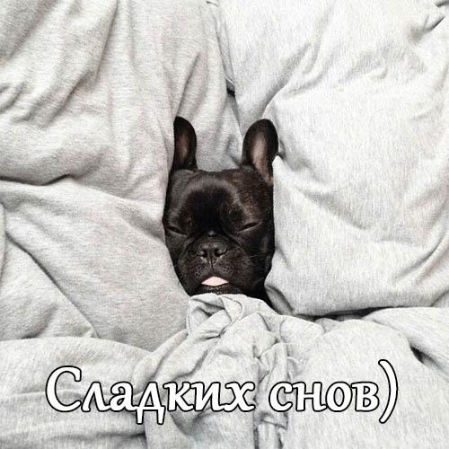 Смешные картинки спокойной ночи - прикольные, интересные 5