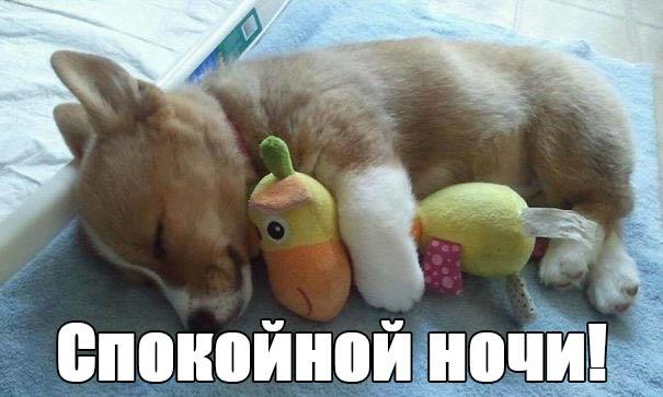 Смешные картинки спокойной ночи - прикольные, интересные 6
