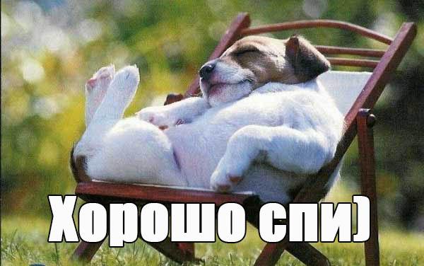 Смешные картинки спокойной ночи - скачать, смотреть, прикольные 9