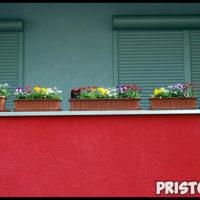Как вырастить цветы на балконе в домашних условиях - советы и помощь 4