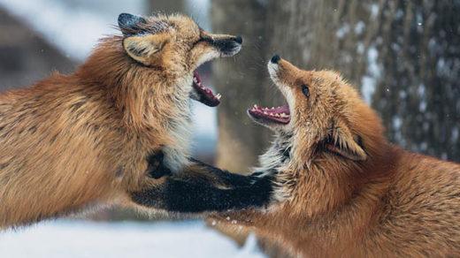 Красивые и удивительные картинки животных - животный мир, фото 11