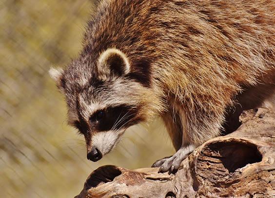Красивые картинки животных - удивительные, прикольные, интересные 6