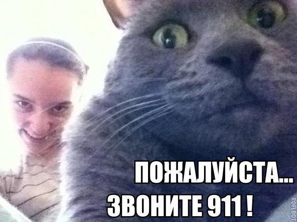 Смешные картинки про собак и котов - прикольные, веселые, забавные 5