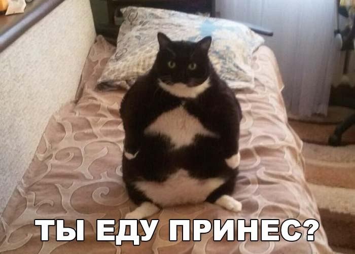 Смешные фото про кошек до слез - прикольные, ржачные и веселые 11