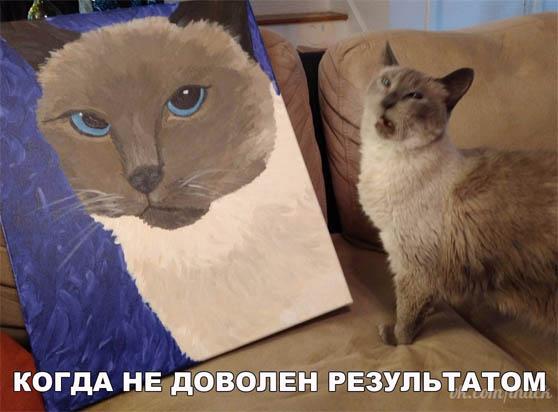 Смешные фото про кошек до слез - прикольные, ржачные и веселые 13