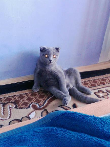 Смешные фото про кошек до слез - прикольные, ржачные и веселые 2