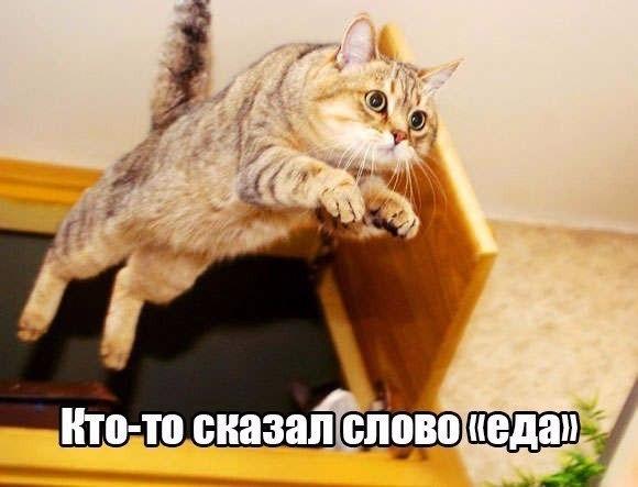 Смешные фото про кошек до слез - прикольные, ржачные и веселые 3