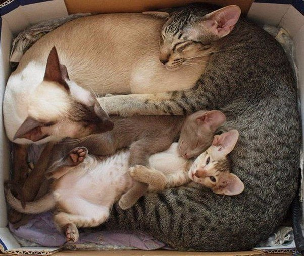 Смешные фото про кошек до слез - прикольные, ржачные и веселые 6