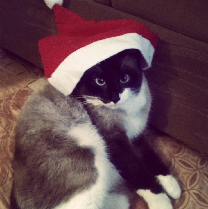 Смешные фото про кошек до слез - прикольные, ржачные и веселые 8