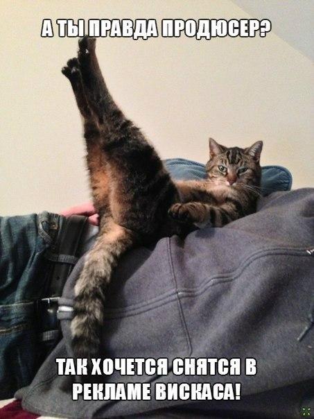Веселые и смешные картинки о животных с подписями - смотреть 1