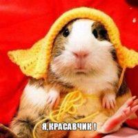 Веселые и смешные картинки о животных с подписями - смотреть 10