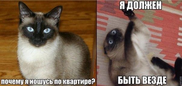 Веселые и смешные картинки о животных с подписями - смотреть 2