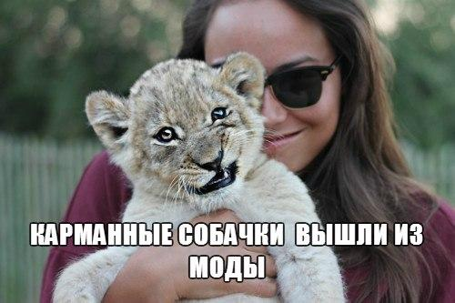 Веселые и смешные картинки о животных с подписями - смотреть 7