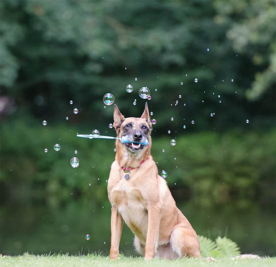 Как научить собаку прыгать через обруч - лучшие методы и способы 3