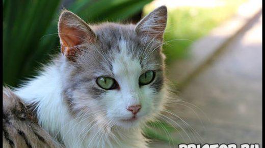 Как правильно ухаживать за кошкой, чтобы она прожила более 20 лет 2