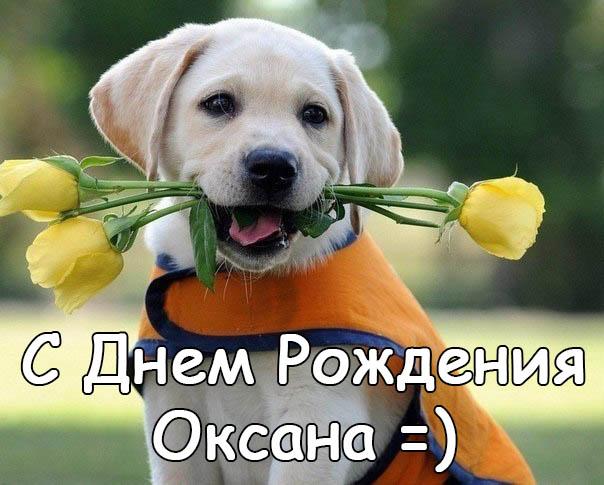 Картинки С Днем Рождения с именем Оксана - красивые и приятные 6