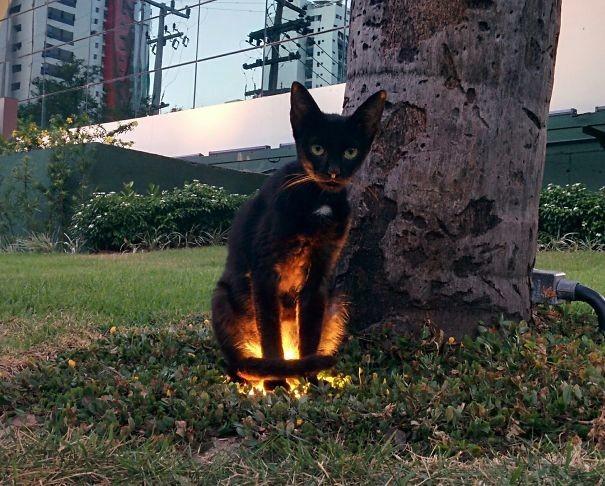 Картинки и фото интересных и необычных котов - смешные и веселые 10