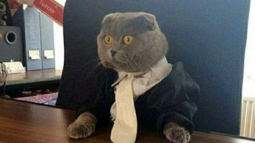Картинки и фото интересных и необычных котов - смешные и веселые 11